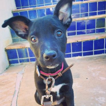 Lilo-puppy